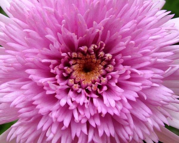 Flower No4 by PaulinAus