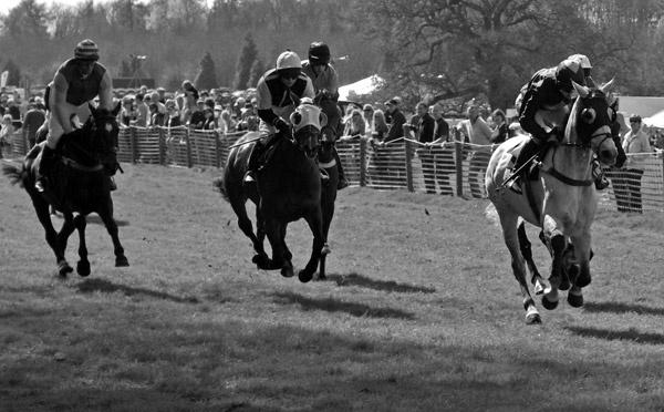 Wild horses run by tazisdylan