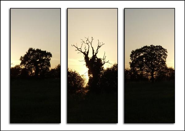 Triptych Image by pokey110