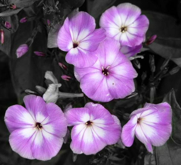 purple haze by Alan_N