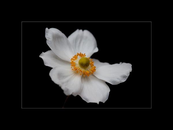 flower by bigheart.
