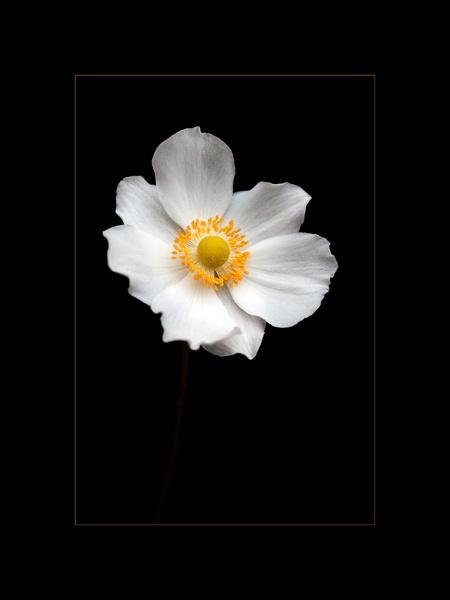 flower2 by bigheart.