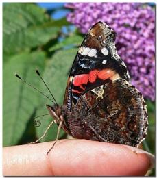 last few butterflies