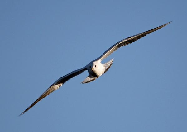 soaring by michaelo