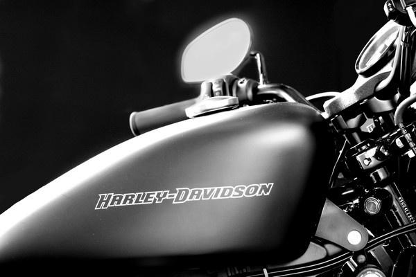 Harley by ENGLISHSKIN