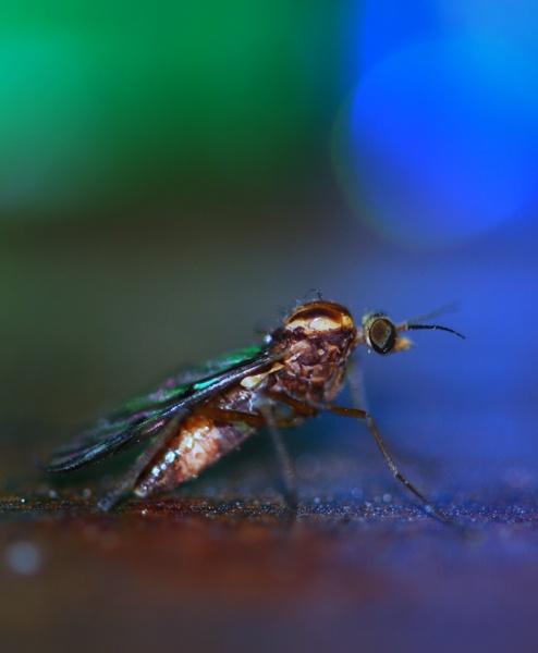 disco bug by Bondgirl