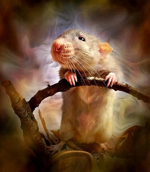 Earth Rat by MRS_IMANDER