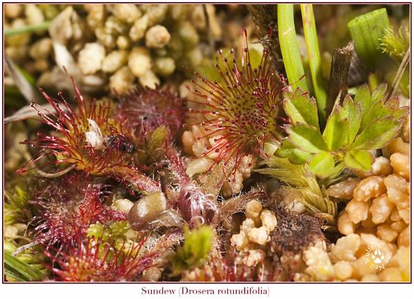 \'Coral garden...? by lobo_blanco