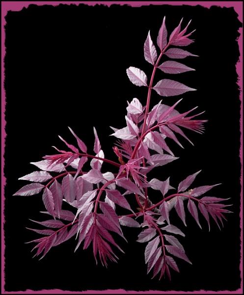 Pink by VonQ
