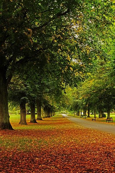 Autumnal avenue by JulianC