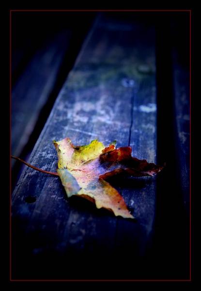 Autumn by cider