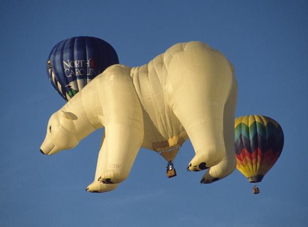 Polar Bear by jinstone