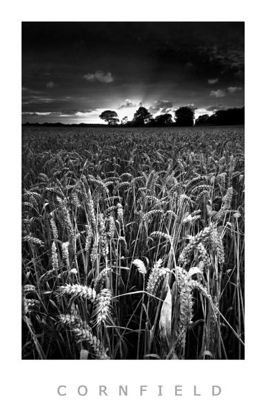 Cornfileld by Brenty