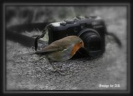 G9 Robin