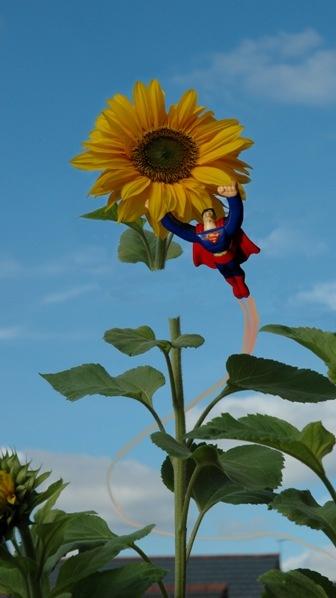 SuperSun ! by Birdseye