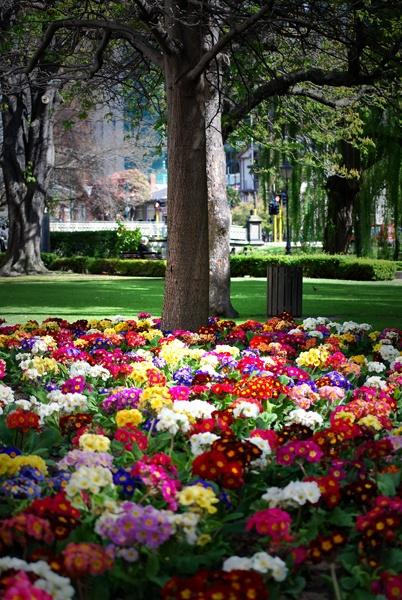 Spring in Christchurch by Bondgirl