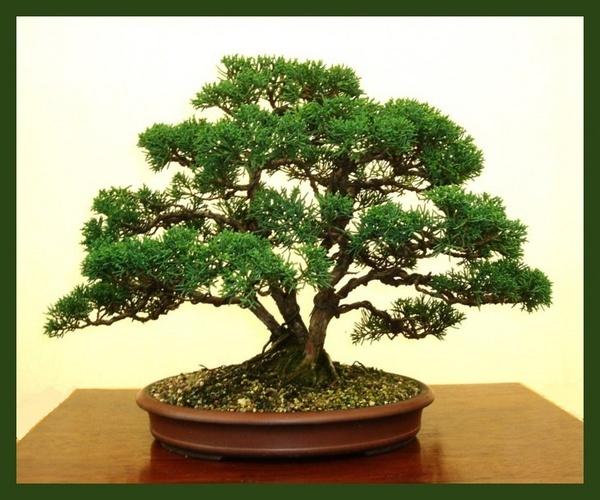 Bonsai Masterpiece by BarrySaich