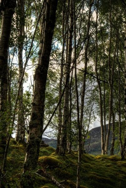 Invertruim woods by donnagreen