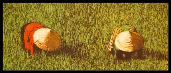 Rice by JdeNLucas