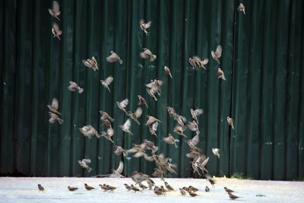 Birds 2 by Butch3r