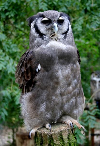 Eagle Owl by GordonLack