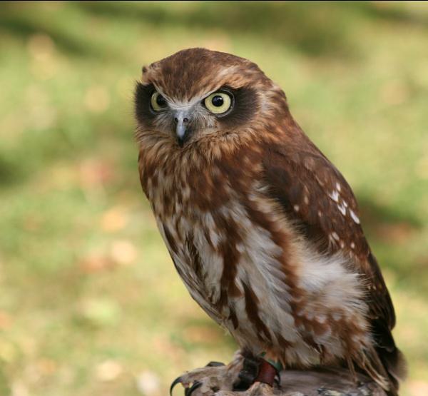 Owl by GordonLack