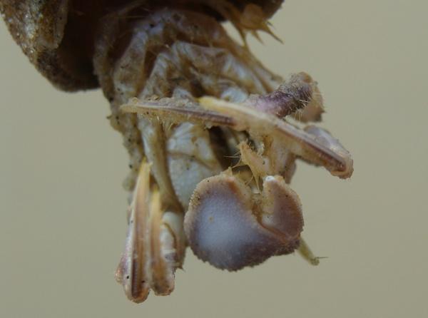 hermit crab by slasher24