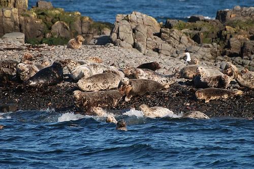 Seals by andyfdo