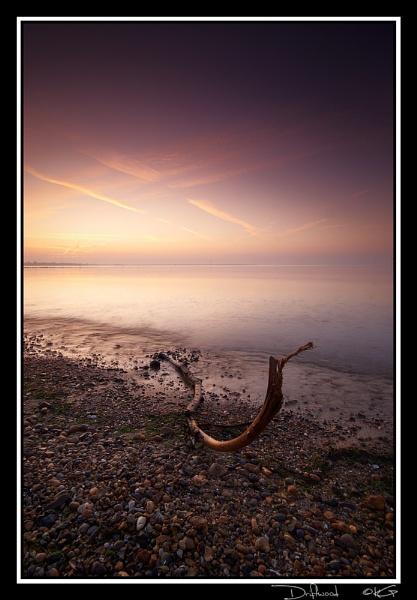 driftwood by KevinGoodchild