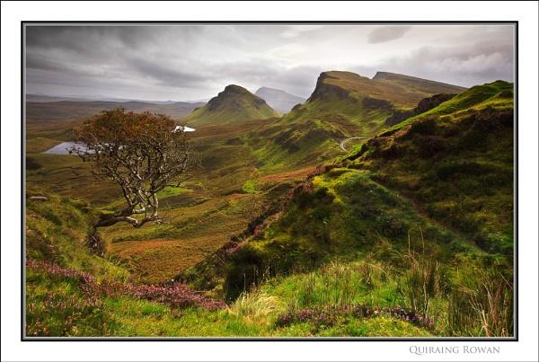 Quiraing Rowan... by Scottishlandscapes