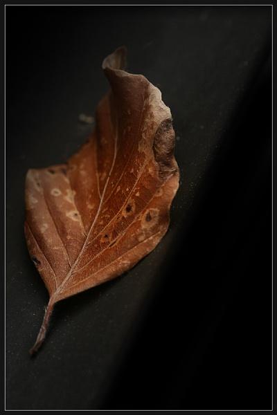 Autumnal Slant by Morpyre