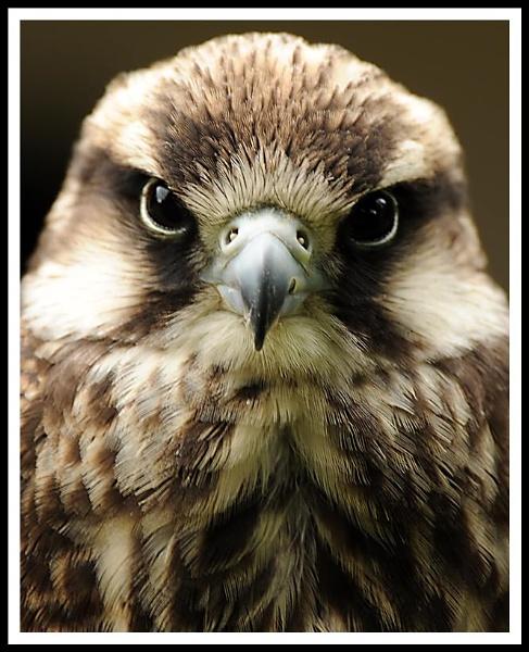 Bird of Prey1 by m3lem