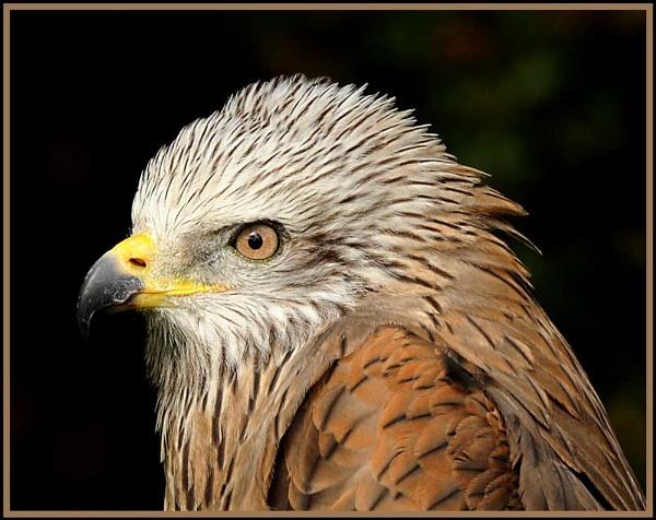 Bird of prey 2 by m3lem