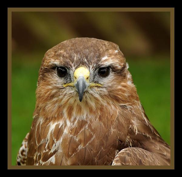 Bird of prey 4 by m3lem