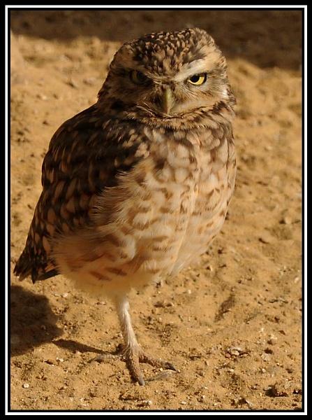 Bird of prey 5 by m3lem
