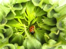 Ladybird. Can you see me