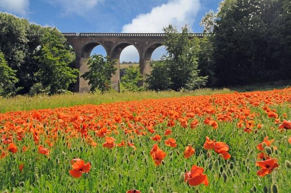 Poppy field by sevenmalt