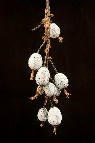 Berries by Stonemushroom