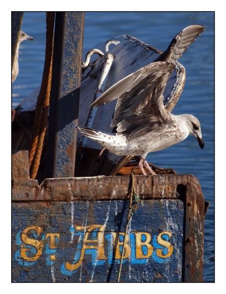 St Abbs by elaronndy