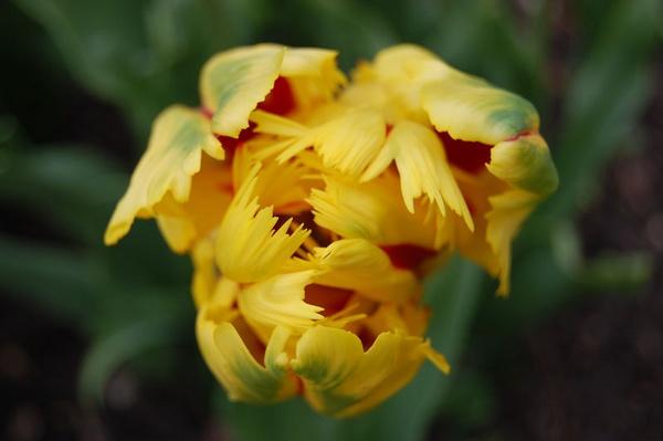 Yellow by pj12