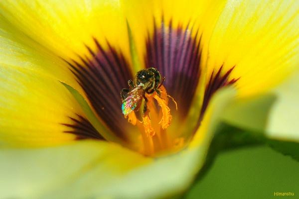 Micro Bee by konu