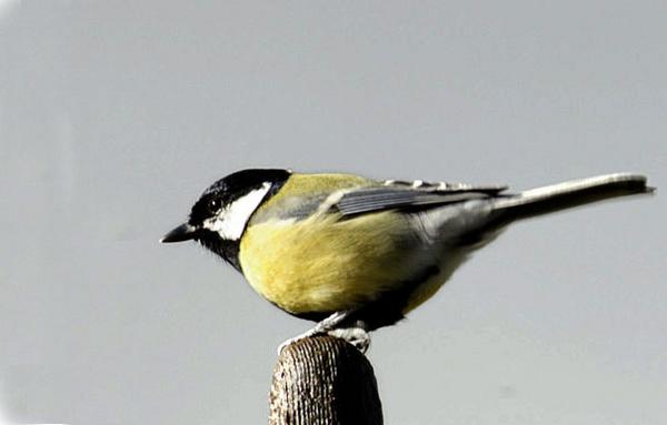 Birdie by Carljorgensen