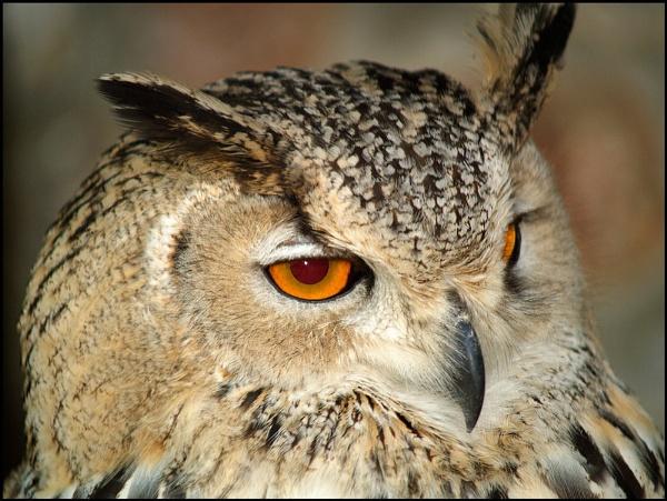 Owl by JdeNLucas