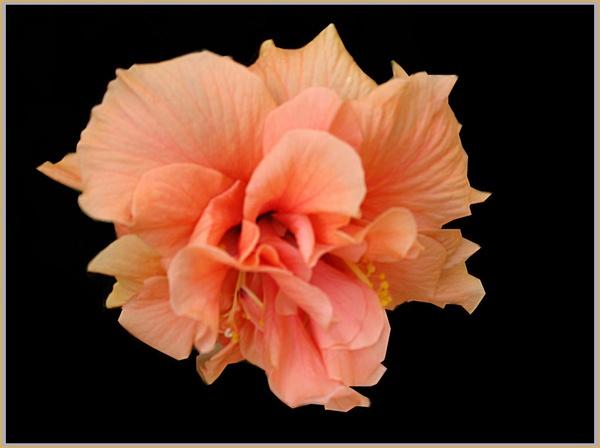 Peach by csopi