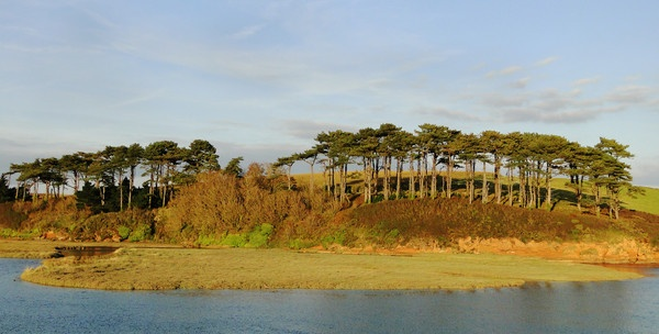 Trees overlooking Otter Estuary by MichaelTuska