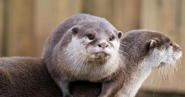 South West Otters by MattMartin