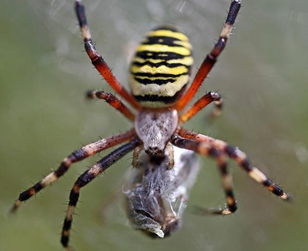 Spider & Prey by GarryRobert