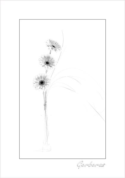Three by janehewitt