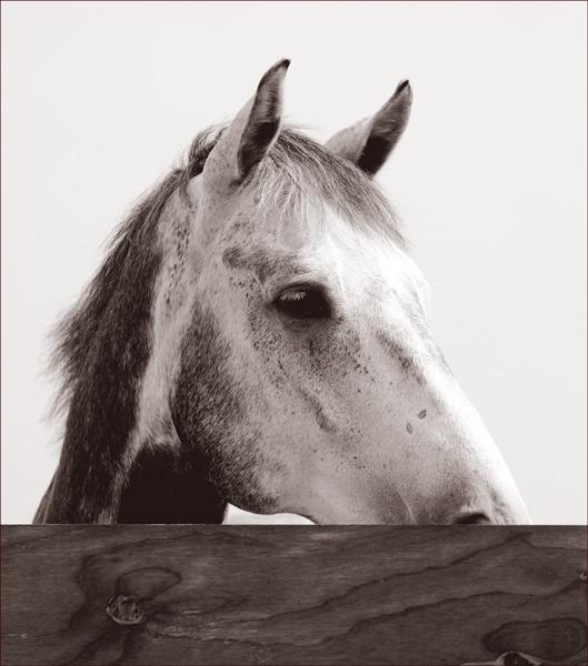 Mono Horse by francisr