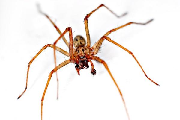 Bath Spider by NikLG
